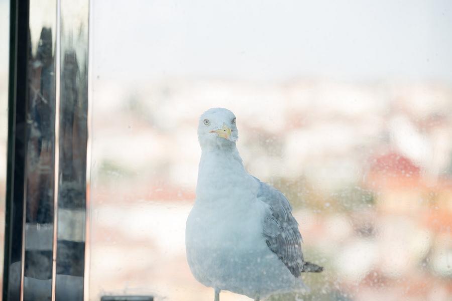 Nişan fotoğraf çekimi İstanbul Marleen & Gökçe - Nişan fotoğrafları
